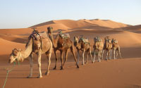 Great Southern Sahara