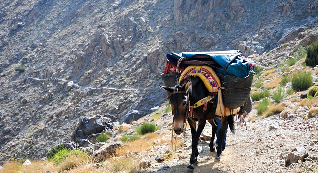 Atlas Mountains Morocco - mule trekking