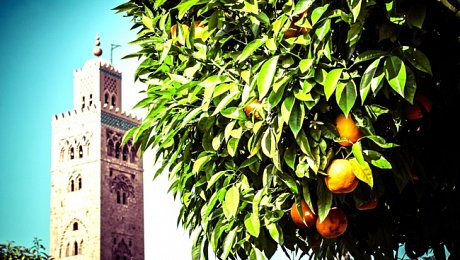 Imperial-Cities-Morocco-tours-Marrakech-koutoubia-oranges