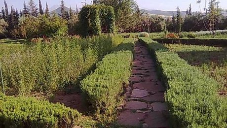 Marrakech-day-tours-Ourika-Nectarome garden
